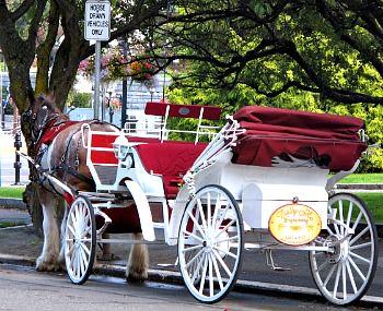 Horse-Drawn Carriage Ride near Victoria's Inner Harbor